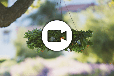 7 - Steinberg-Miller - Shade Tree Films
